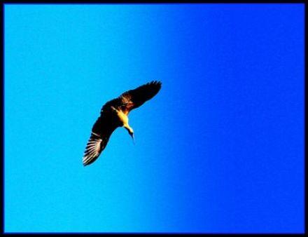 eagle-copy-1